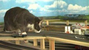 Cat vs model train